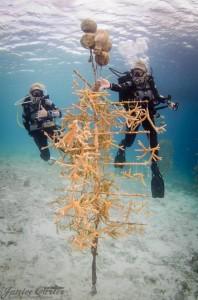 Scuba Diver Girl